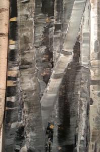 Ravena Wolf, Birch Trees, acrylic on canvas